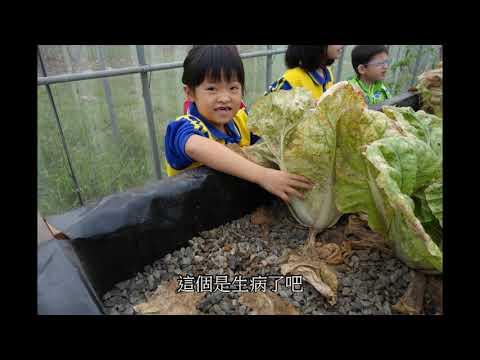 魚菜礫共生影片